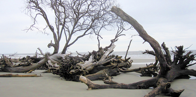 Hunting Island State Park in South Carolina's Lowcountry