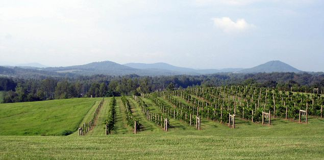 Blue Ridge Mountains from South Carolina's Chattooga Belle Farm