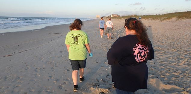 Explore Myrtle Beach, SC, like never before on a sea turtle patrol.