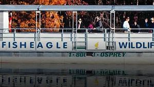 FishEagle Wildlife Swamp Eco-Boat Tours
