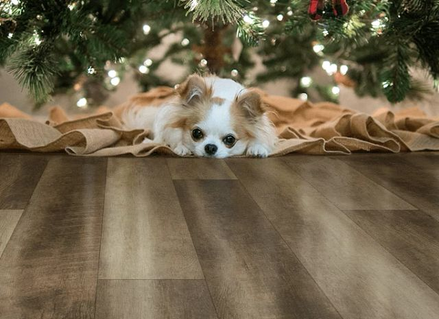 Healthy pets for the holidays