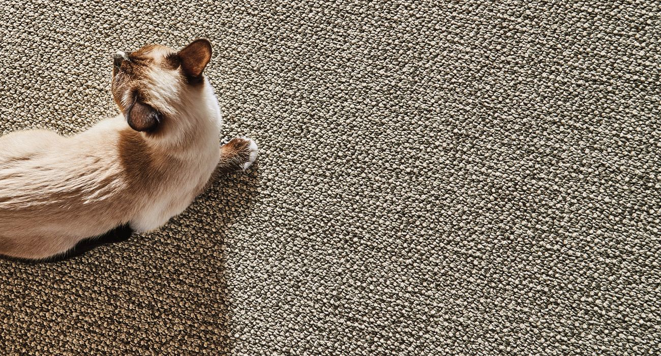 Carpet style Purrfection in Willow
