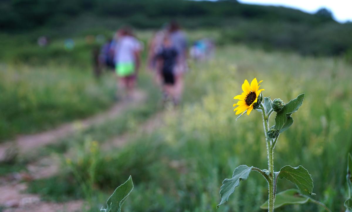 Lyric Nature Hike Wildflower Hills