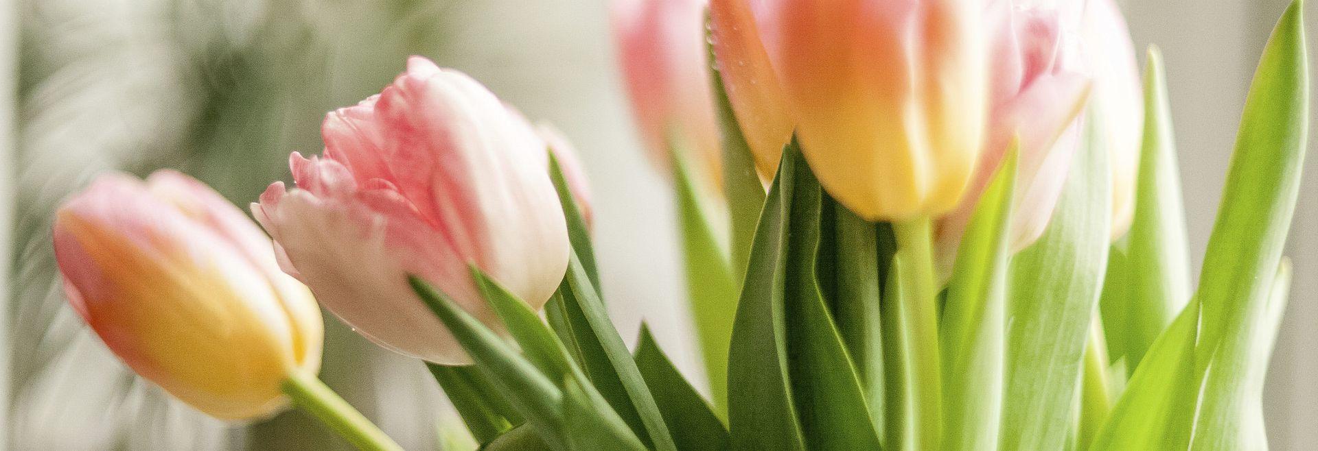 Tulips Roses