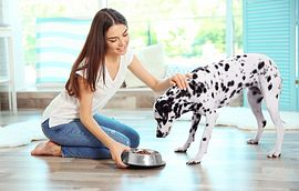 Woman Feeds Dog on Vinyl Flooring