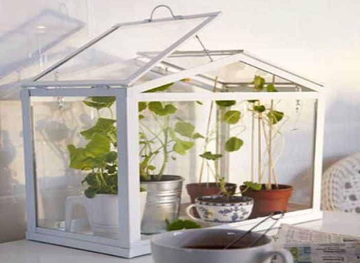 Mini greenhouse with small potted plants inside