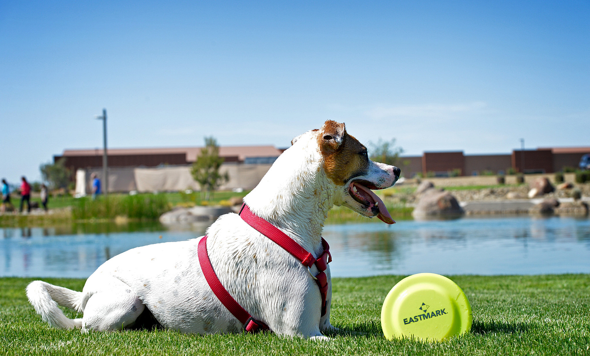 Eastmark Community Dog Park