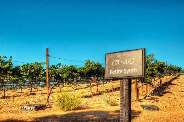 Blog_ALC_Syrah_Vineyards