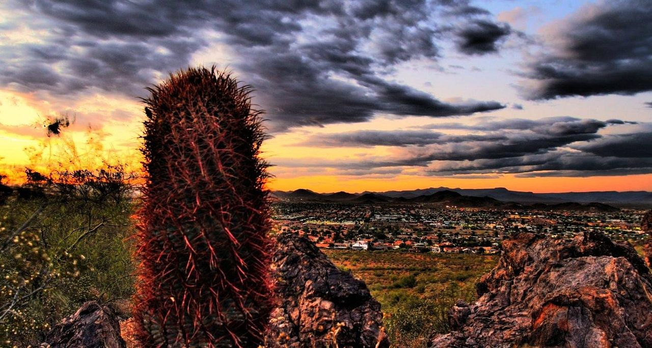 Skyline view with cactus