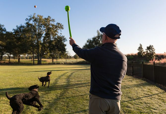 Man throwing ball for dogs at the dog park