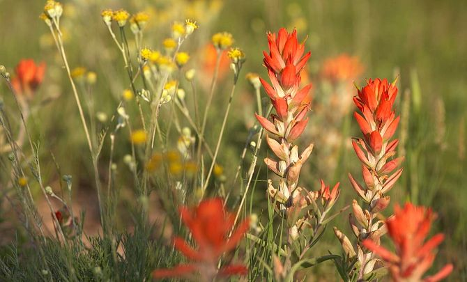 The Canyons Wildflowers