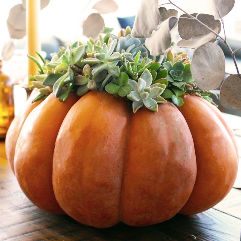 Blog_Thanksgiving_Table_Styles_E