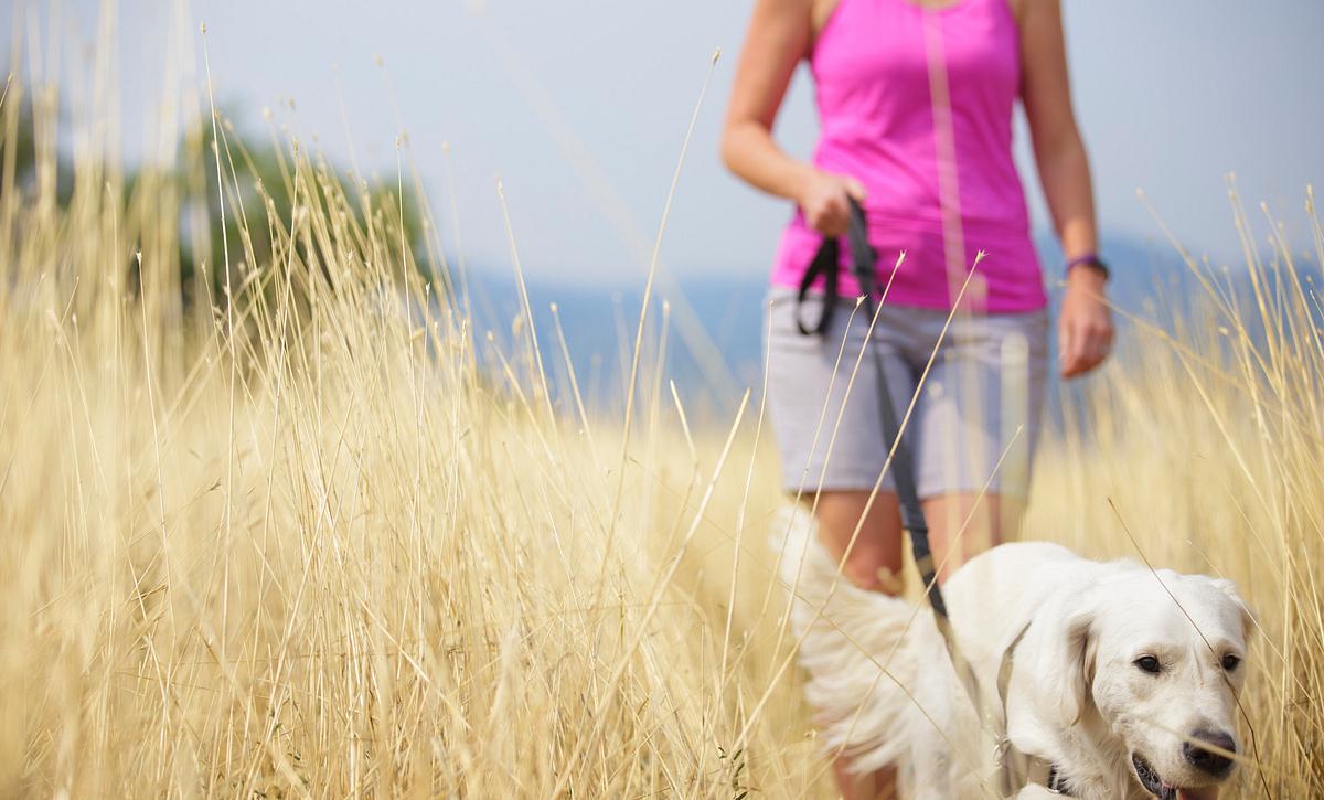 Solstice Lifestyle Summer Dog Walk Grass