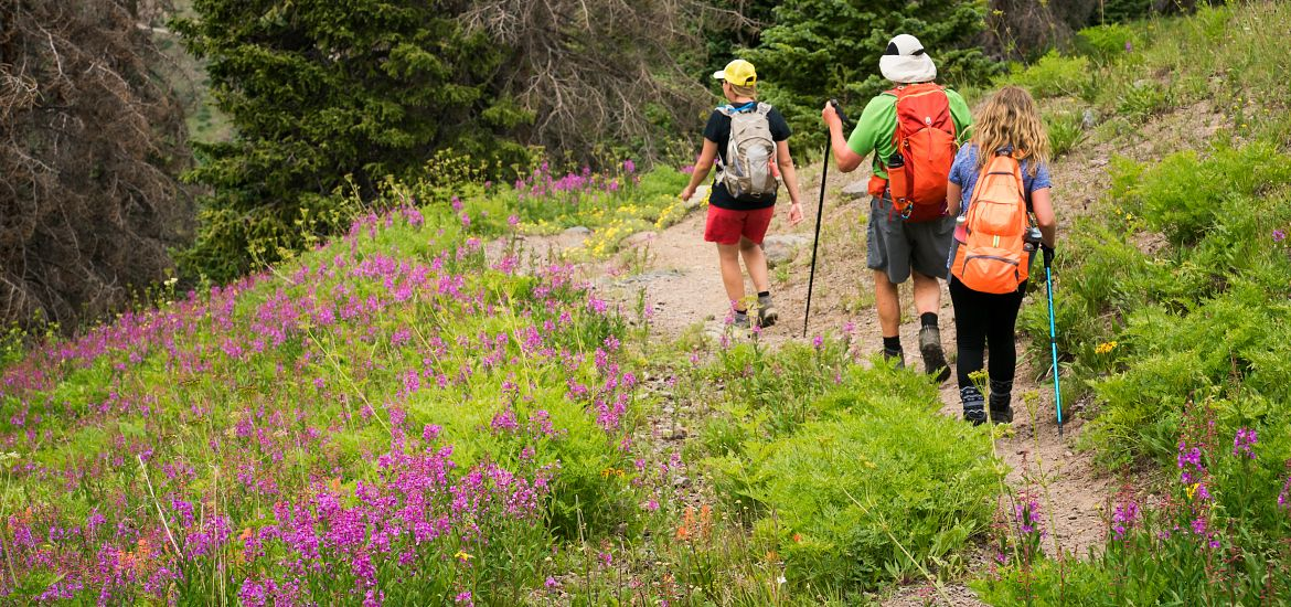 Blog Hiking Colorado Mountain Trails Wildflowers Getty Images