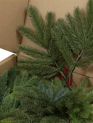 close-up photo of Christmas tree branch samples in a box