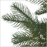 Cathedral Fir Tree PDP Foliage
