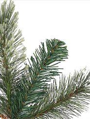 Nahaufnahme von Kiefernnadeln eines Weihnachtsbaums