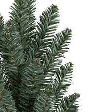 close-up shot of Balsam Hill Blue Spruce branches