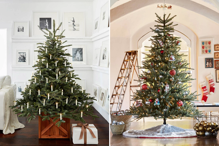 European Fir tree with candle-designed baubles and the Weymouth Spruce tree with red and silver décor