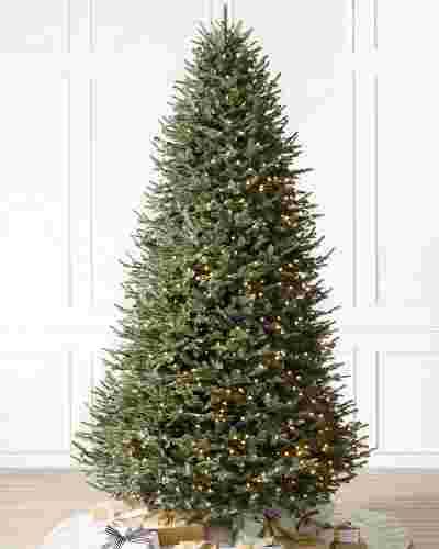 BH Balsam Fir Narrow Tree-Main Image