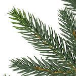 Saratoga Spruce Tree PDP Foliage