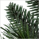 California Baby Redwood Flip  PDP Foliage