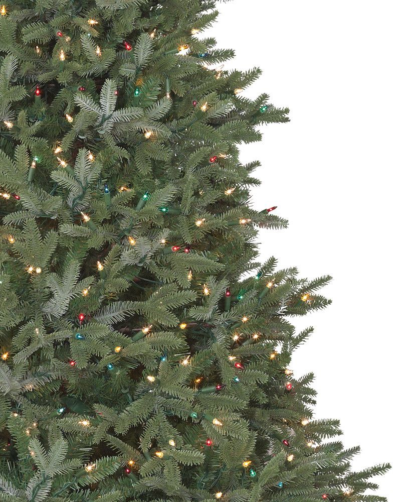 fraser fir Fraser fir trees grow at a slow rate it is not a fast process taking about 11 years to grow a 6-7' from seed to sell as wholesale fraser fir christmas trees.