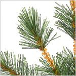 Frosted Sugar Pine Tree PDP Foliage