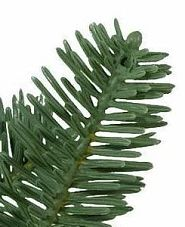 True Needle foliage of Balsam Hill BH Balsam Fir