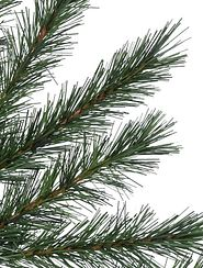 close-up of Christmas tree pine needles