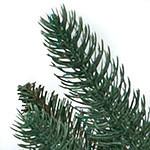 Oakville Outdoor Tree PDP Foliage