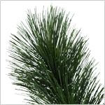 Scotch Pine Tree PDP Foliage