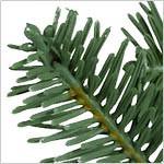 BH Balsam Fir Flip Tree  PDP Foliage