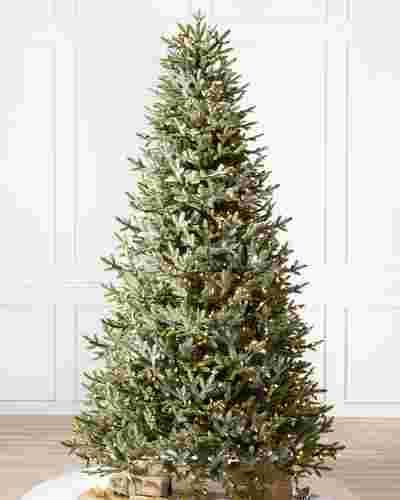 BH Fraser Fir  Narrow Tree-1
