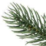 BH Blue Spruce Flip Tree  PDP Foliage