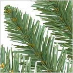 Rockefeller Pine Tree PDP Foliage