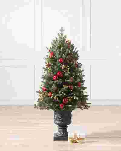 Norway Spruce Holiday Potted -1