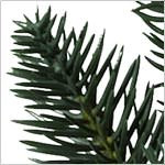 Aspen Estate Fir Flip Tree  PDP Foliage