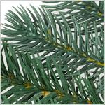 King Mountain Pine Tree PDP Foliage