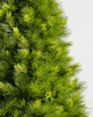 close-up of Christmas tree pine needles