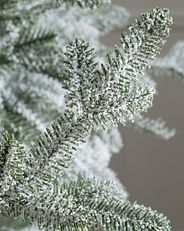 frosted Christmas tree foliage