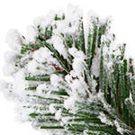 Outdoor Frosted Evergreen PDP Foliage