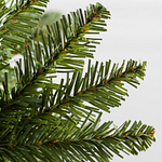 Vancouver Spruce PDP Foliage