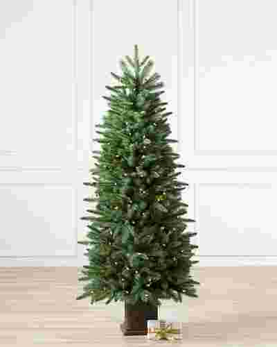 Windsor Potted Spruce Tree-1