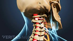 Structural Anatomy of the neck with spinal cord highlighted