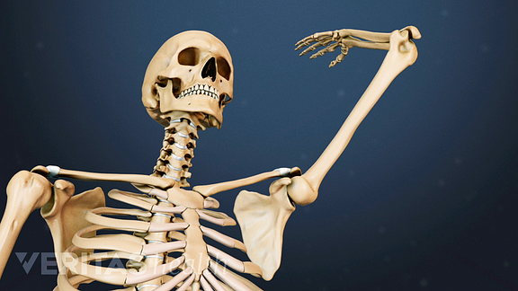 Medical illustration of he upper body showing the range of motion of the shoulder