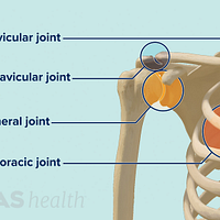 Anterior view of the shoulder joint labeling the sternoclavicular, acromioclavicular, glenohumeral, and scapulothoracic joints.