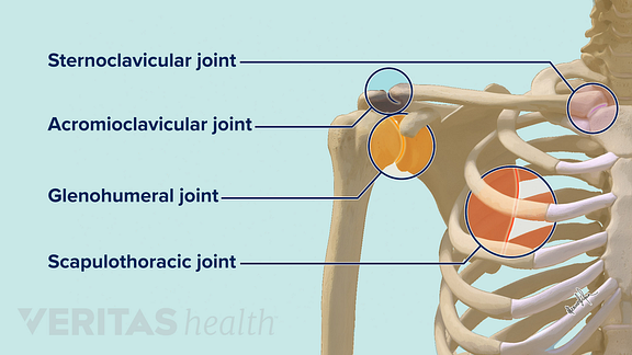 Shoulder joints including the glenohumeral joint, the acomioclavicular joint, the scapulothoracic joint, and the sternoclavicular joint.