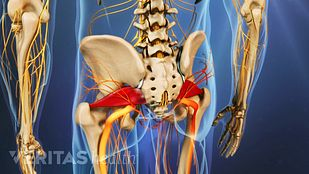 The piriformis is a small muscle located deep in the buttock, behind the gluteus maximus.