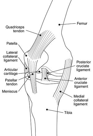 Derrick Rose's Knee Injuries Explained